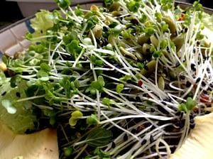 recipe - super nutrition salad 2